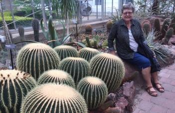 Cactus in desert room