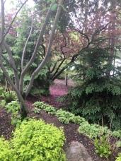 Petals on the ground Japenese Garden